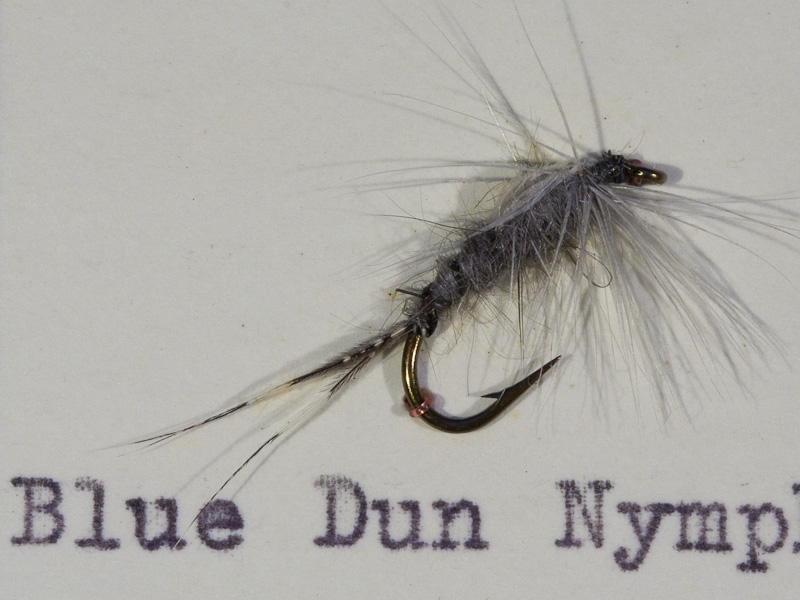 Blue Dun Nymphe