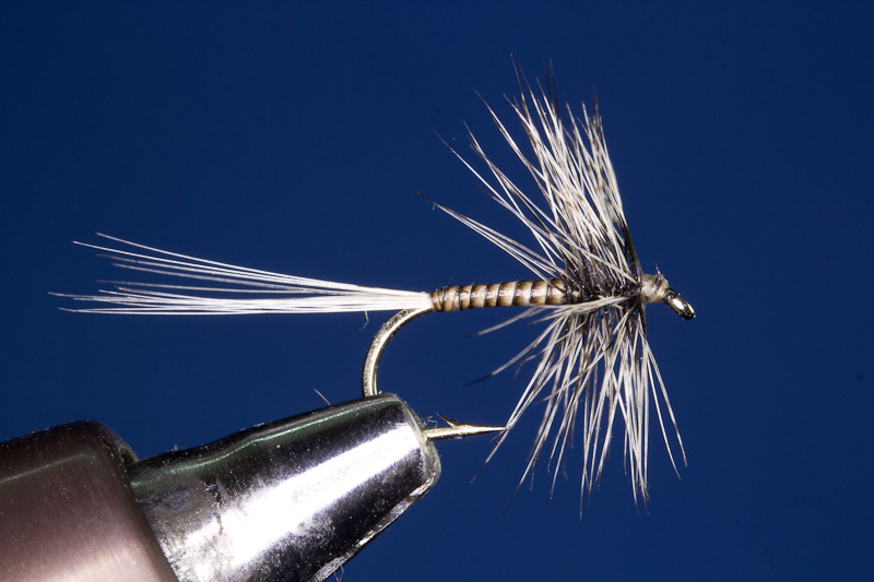 Badger Hackle